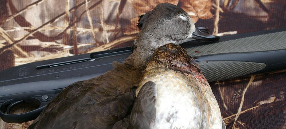 duck-and-gun