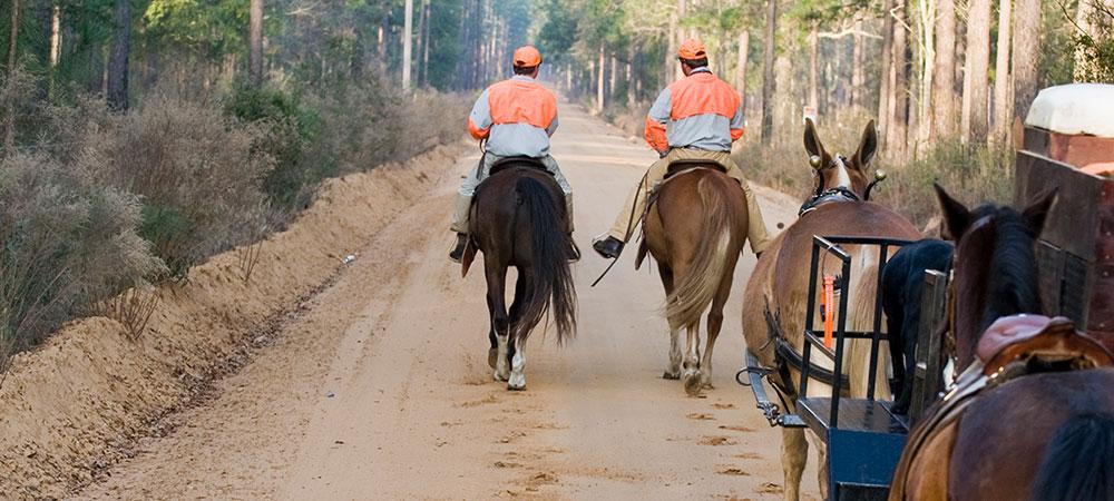 horses-on-trail