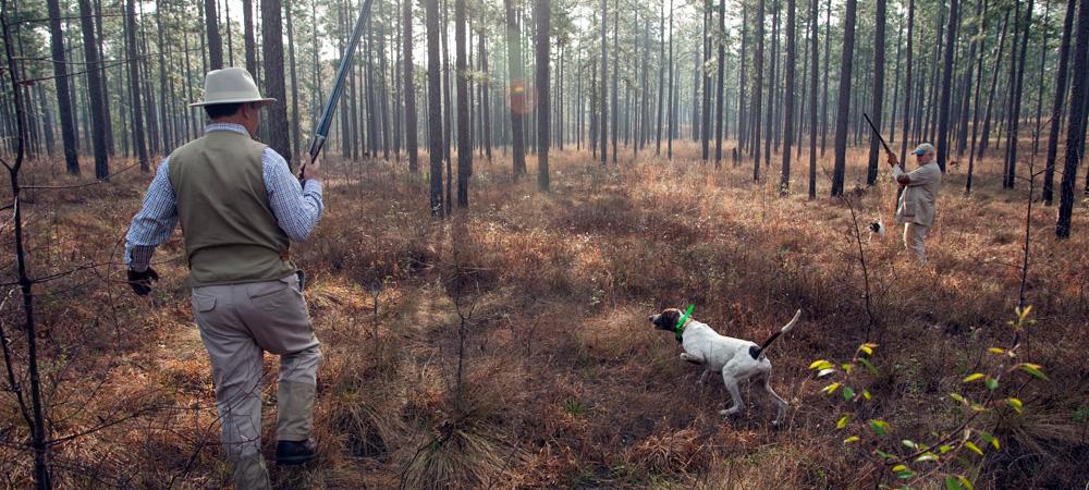 Georgia Quail Hunting Lodge   Pine Hill Plantation